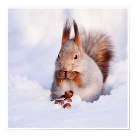 Poster  Squirrel in the snow