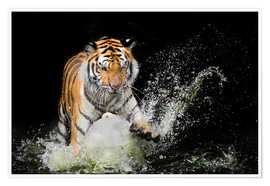 Premium poster Tiger Makes the water
