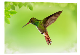 Acrylic glass  hummingbird