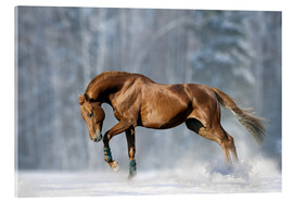 Acrylic print  Horse in snow