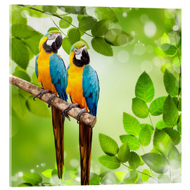 Acrylic print  2 blue and yellow parrot