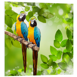 Forex  2 blue and yellow parrot