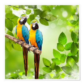 Premium poster 2 blue and yellow parrot