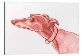 Aluminium print  Greyhound pencil drawing white and red colour pencil sketch - Jim Griffiths