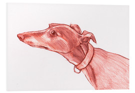 Foam board print  Greyhound pencil drawing white and red colour pencil sketch - Jim Griffiths