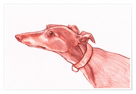 Premium poster Greyhound pencil drawing white and red colour pencil sketch