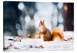 Canvas  Squirrel looking for its nut