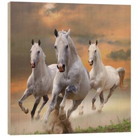 Wood print  White stallions at gallop