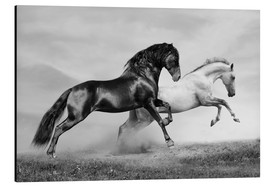 Alu-Dibond  Horses black and white