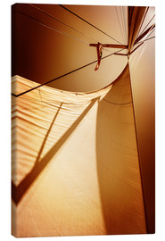 Canvas print  Sails in sunset light