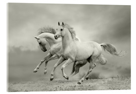 Acrylic print  Horses in Summer