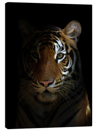 Canvas  bengal tiger head in the dark night