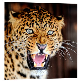 Acrylic glass  Leopard portrait