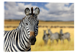 Acrylic glass  View of zebras