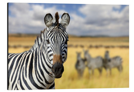 Alu-Dibond  View of zebras