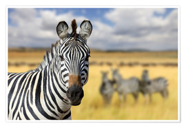 Premium poster  View of zebras