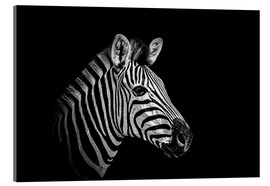 Acrylic glass  Zebra - close up
