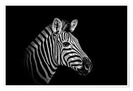 Premium poster  Zebra - close up