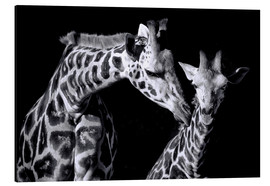 Alu-Dibond  Mother and child giraffe - Sabine Wagner
