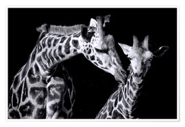 Premium poster Mother and child giraffe