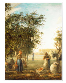 Premium poster Apple harvest