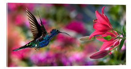 Acrylic glass  Hummingbird (Archilochus Colubris) with lilies