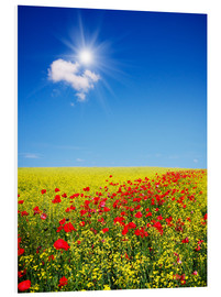 Forex  Sunny landscape with flowers in a field