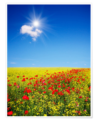 Sunny Landscape With Flowers In A Field Posters And Prints