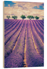 Wood  Lavender field with trees in Provence, France