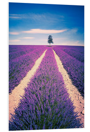 Foam board print  Lavender Field with tree in Provence, France