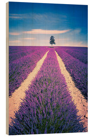 Wood  Lavender field with tree in Provence, France