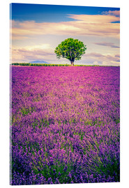 Acrylic print  Lavender field with tree in Provence, France