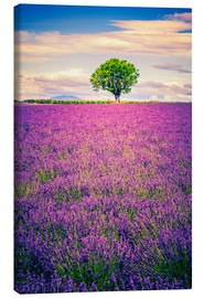 Canvas print  Lavender field with tree in Provence, France