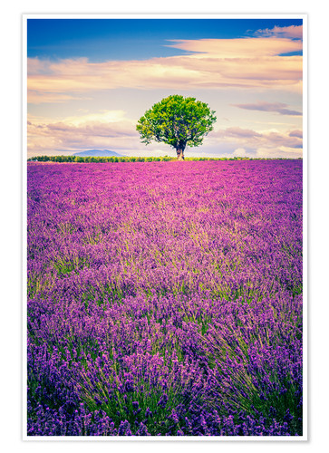 Premium poster Lavender field with tree in Provence, France
