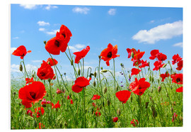 Foam board print  Red poppies in green field