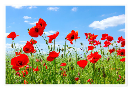 Premium poster Red poppies in green field