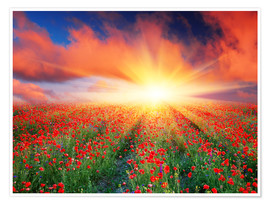 Premium poster  Sunset over a field of red poppies