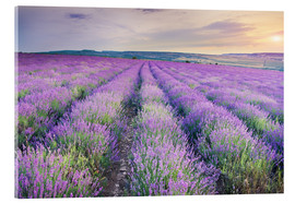 Acrylic glass  Meadow of lavender on sunset