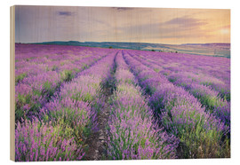 Wood print  Lavender Meadow at sunset