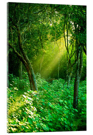 Acrylic print  Sunlight rays in the rain forest in Sri Lanka