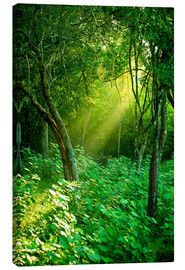 Canvas  Sunlight rays in the rain forest in Sri Lanka