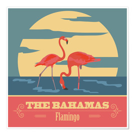 The Bahamas - Flamingo