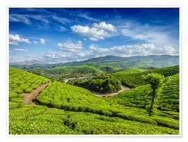 Green tea plantations in morning