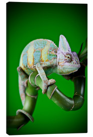 Canvas print  green chameleon on bamboo