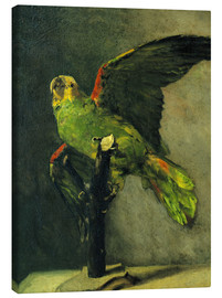 Canvas print  The green parrot - Vincent van Gogh