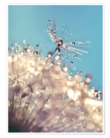 Poster Dandelion The one