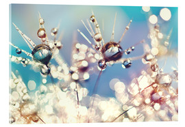 Acrylic glass  Dandelion with Rainbowdrops - Julia Delgado