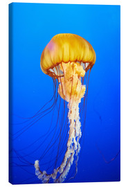 Canvas print  Orange jellyfish in blue ocean