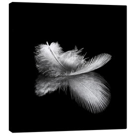Canvas  Light as a feather