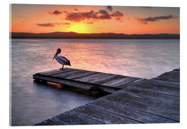 Acrylic print  A pelican resting on the lake Tuggerah
